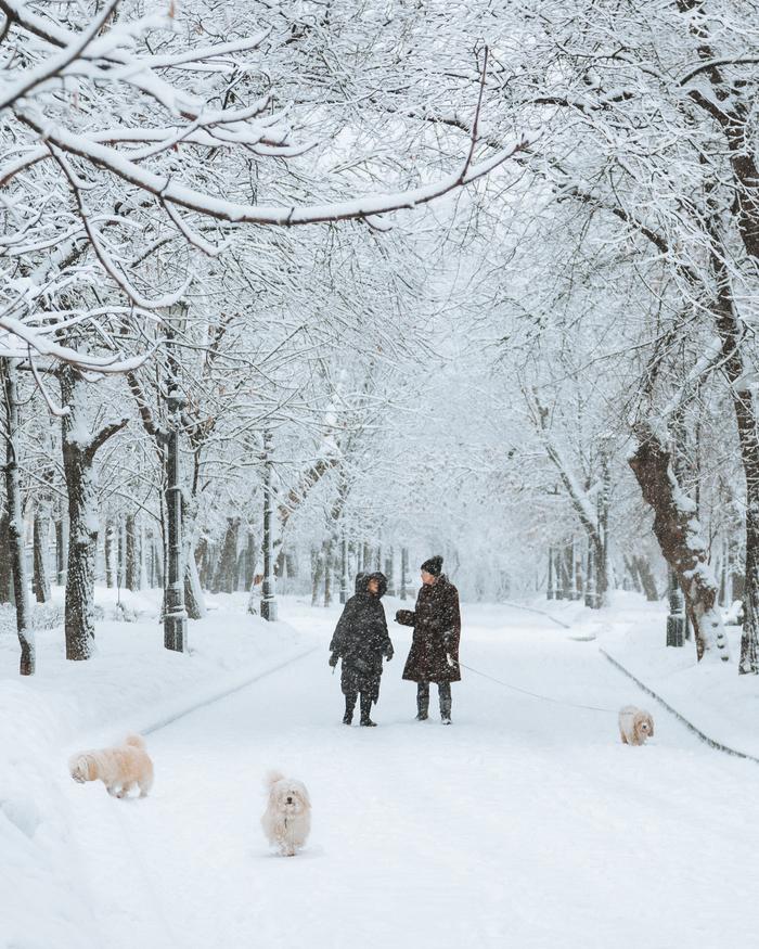 Сегодня в Москве Снег, Снегопад, Москва, Фотография, Зима, Погода, Сегодня, Длиннопост