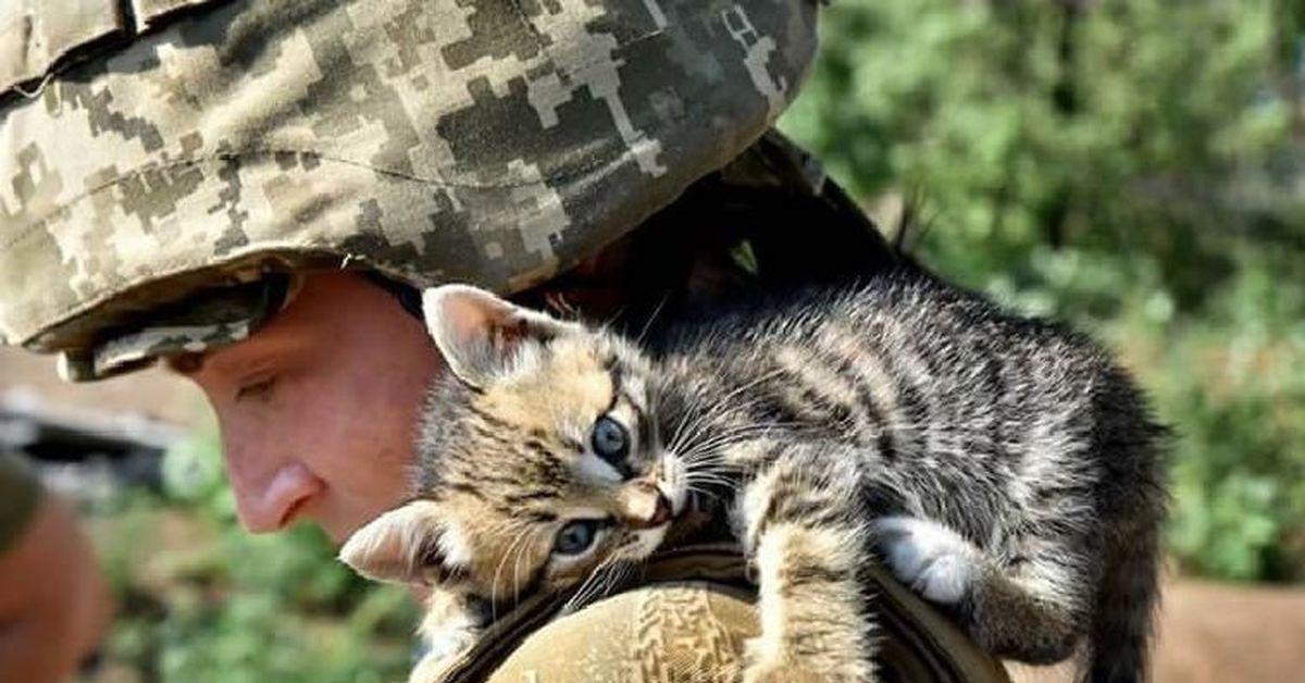 обсудим коты бойцы картинки ещё мог
