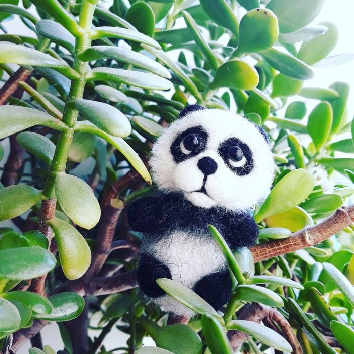 Сваляла панду :) Как вам? Сухое валяние, День святого Валентина, Мягкая игрушка, Панда, Медведь, Handmade, Длиннопост