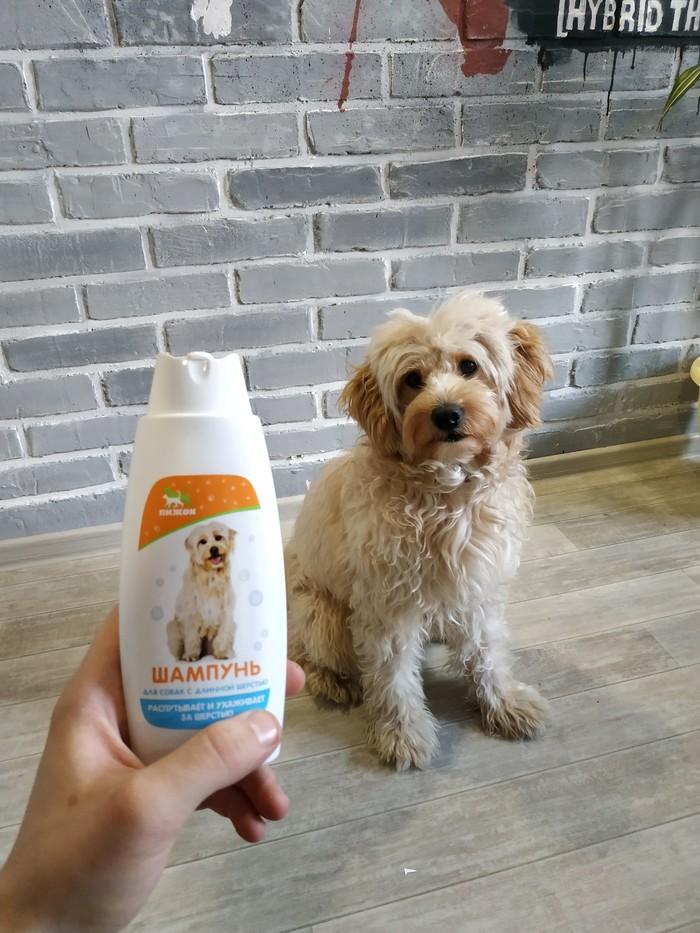Когда нашел шампунь для своего пса