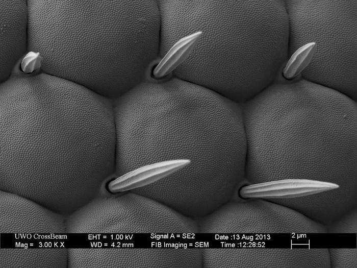 Обычные вещи под микроскопом. Длиннопост, Интересное, Как Мне Это Развидеть?, Микроскоп