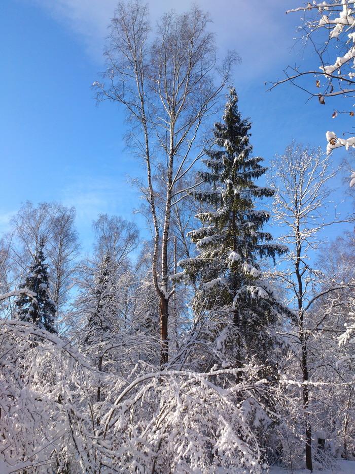 Зимний лес и Солнце Лосиный остров, Природа, Зима, Снег, Лес, Красота, Сказка, Длиннопост