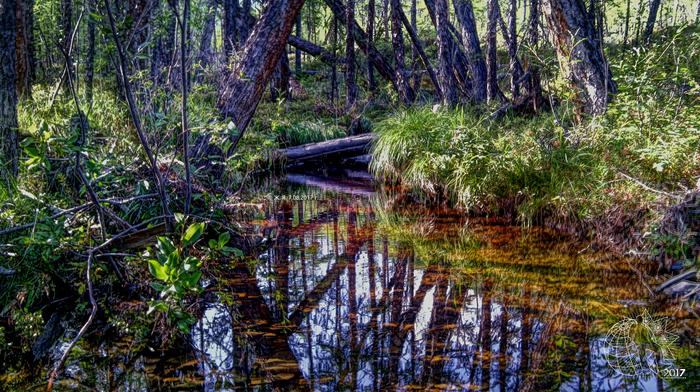 Просто немного лепоты вам в ленту ^_^ Республика Саха, Якутия, Природа, Лепота, Река