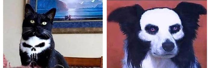 Котатель и Белый череп чёрное ухо Кот, Животные, Marvel, Интересный окрас, Собака, Череп, Photoshop