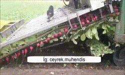 Редисоуборочный комбайн. Спецтехника, Комбайн, Сбор урожая, Сельское хозяйство, Нидерланды, Видео, Гифка