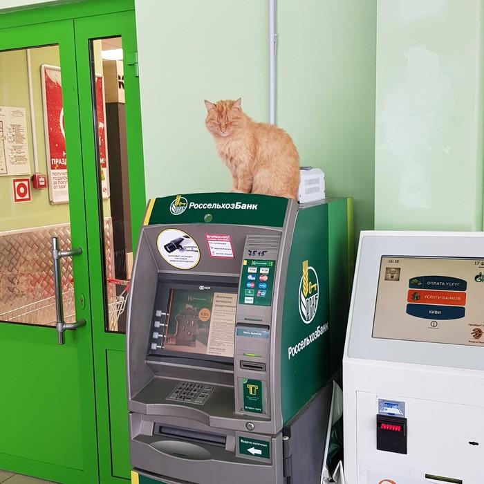 Банкомат под надежной охраной Кот, Банкомат, Охрана, Домашние животные