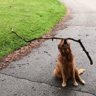 Мастер баланса