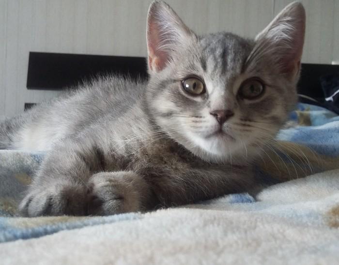 Когда котейки стали совсем взрослыми. Кот, Пушистый, Длиннопост, Домашние животные