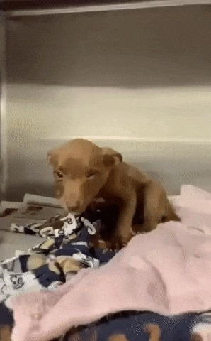 Самый милый щенок