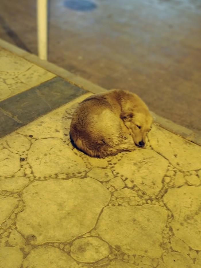 Любите братьев наших спящих Собака, Фотография, Милота, Сон, Стамбул, Шарм-Эль-Шейх, Длиннопост