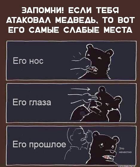 Слабые места медведя