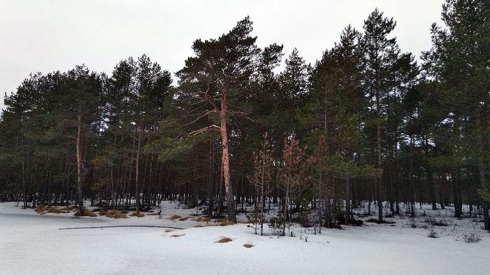 Закрытие сезона Зима, Рыбалка, Окунь, Зимняя блесна, Длиннопост