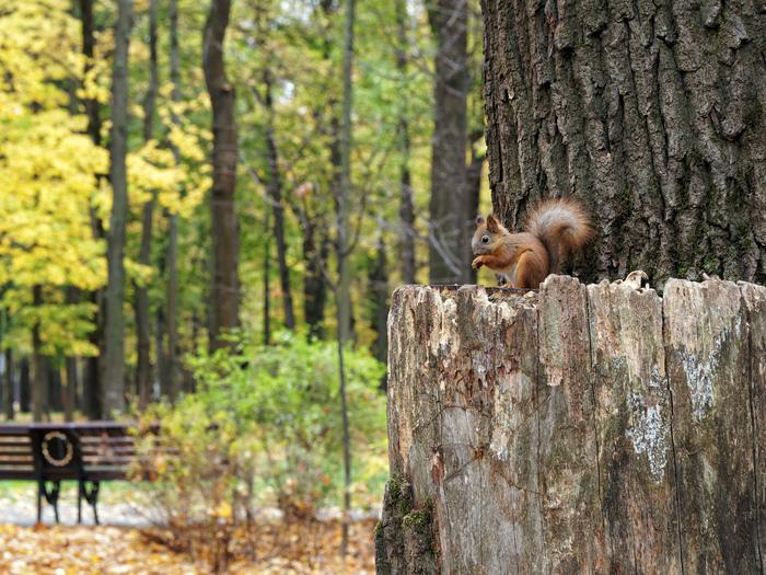 Осенние парки Москвы Москва, Фотография, Осень, Измайлово, Ботанический сад, Нескучный сад, Останкино, Закат, Длиннопост