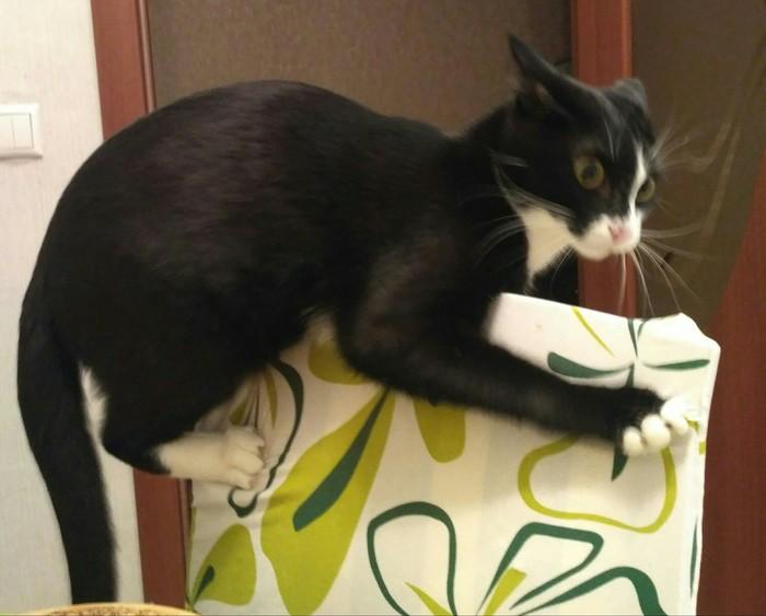 Кот и стул. Кот, Черный кот, Стул, Псих, Март