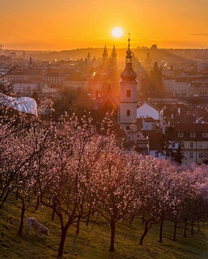 Доброе утро, весна идёт! Прага.