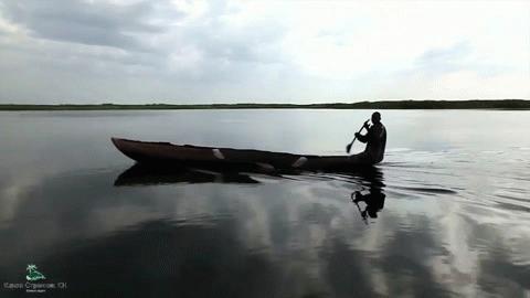 Нилоты – когда у тебя вместо двора болото Нилоты, Южный Судан, Болото, Длиннопост, Судд, Гифка