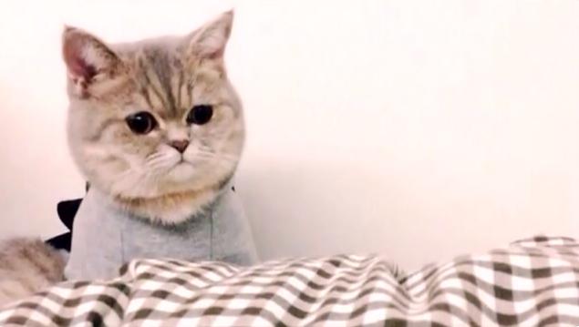 Котейка в кофтейке