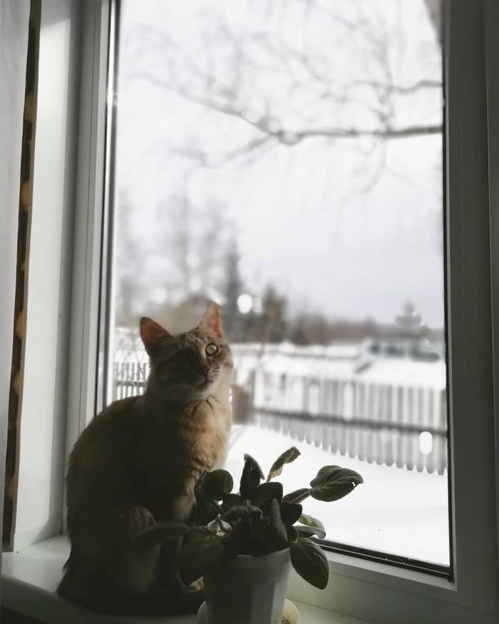 Кошка у окошка Кот, Окно, Дача, Домашние животные