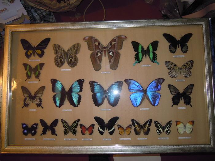 Коллекция бабочек Рукоделие без процесса, Бабочка, Природа