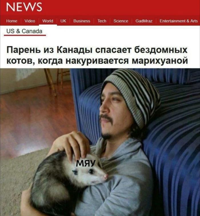 Мои коты Опоссум, Кот, Животные, Длиннопост