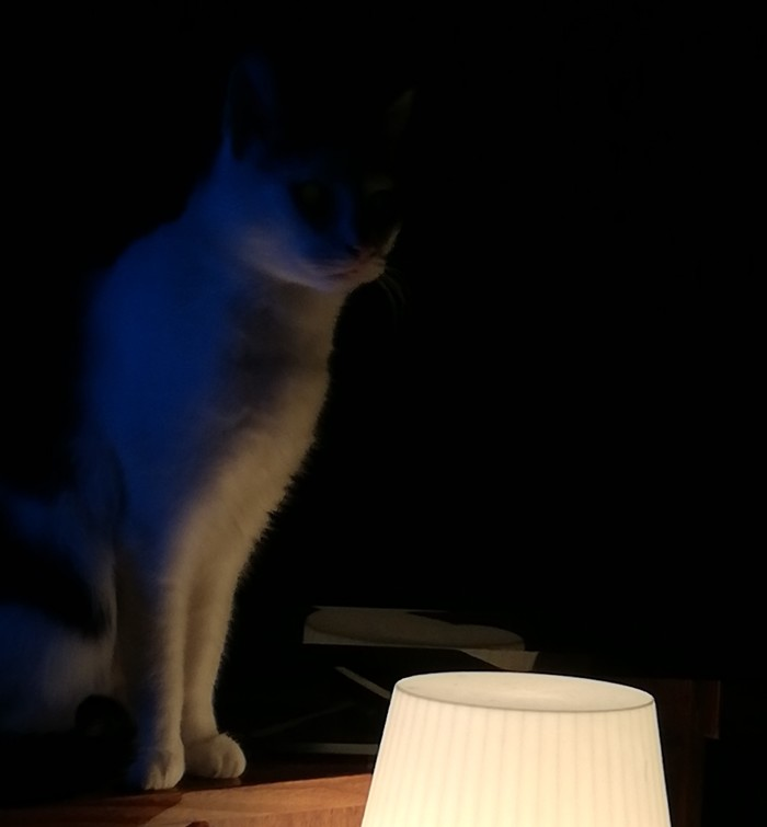 У меня есть свой кот с лампой))
