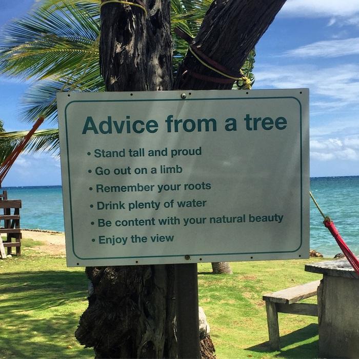 Советы дерева Дерево, Совет, Табличка