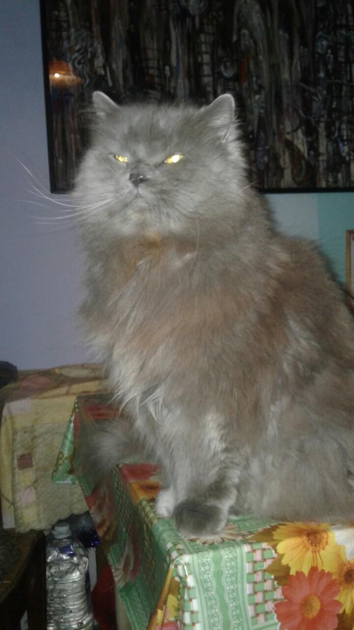 На волне котов-старичков Кот, Возраст, Фотография, Длиннопост, Домашние животные
