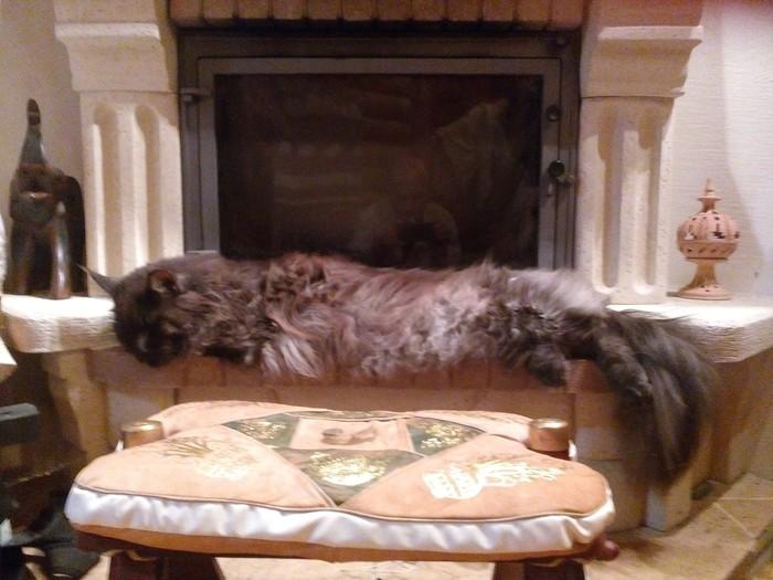 Очередной котей Кот, Мейн-Кун