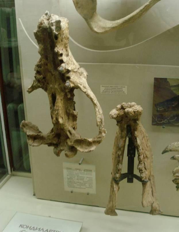 Монголоникс Кайнозой, Палеонтология, Окаменелости, Млекопитающие, Хищник, Доисторические животные, Длиннопост
