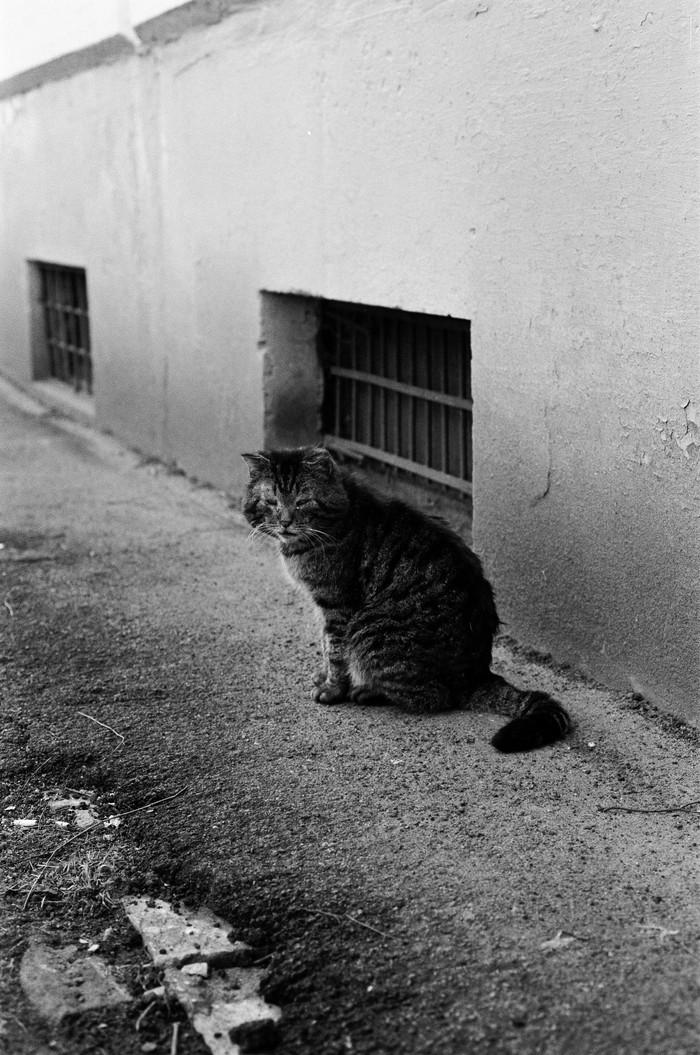 Уличный кот Кот, Пленка, Фотография