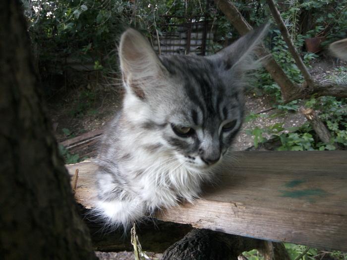 Потерялся кот в районе Симеизких очистных сооружений Кот, Симеиз, Потерялся кот, Помогите найти, Помощь, Крым, Без рейтинга