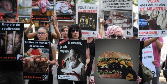 Во Франции двоих веганов посадили в тюрьму за погромы в мясных лавках Agronews, Новости, Франция, Веганы, Мясо, Протест, Погром, Закон