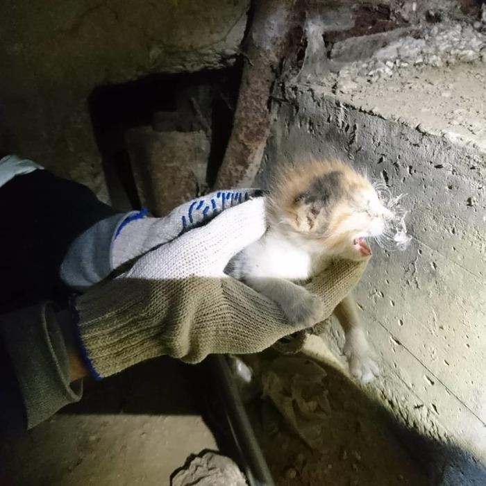 Шанс на жизнь Кот, Кошкиспас, Спасение животных, Трехцветная кошка, Длиннопост
