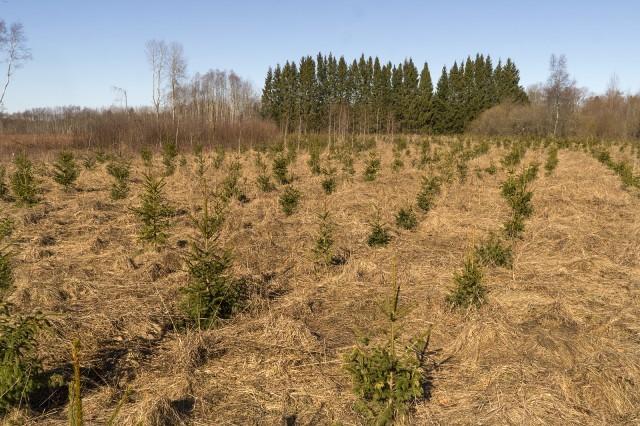Почему у нас нельзя как в Эстонии. О запрете посадки леса на СХ землях Лесной форум Гринпис, Сельское хозяйство, Законы РФ, Длиннопост