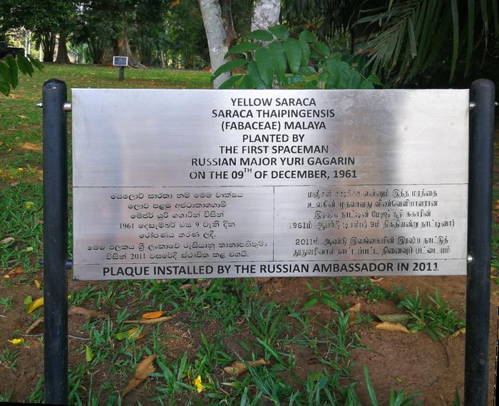 Шри-ланкийское чудо Гагарина Гагарин, Шри-Ланка, Необычное, Дерево, Длиннопост