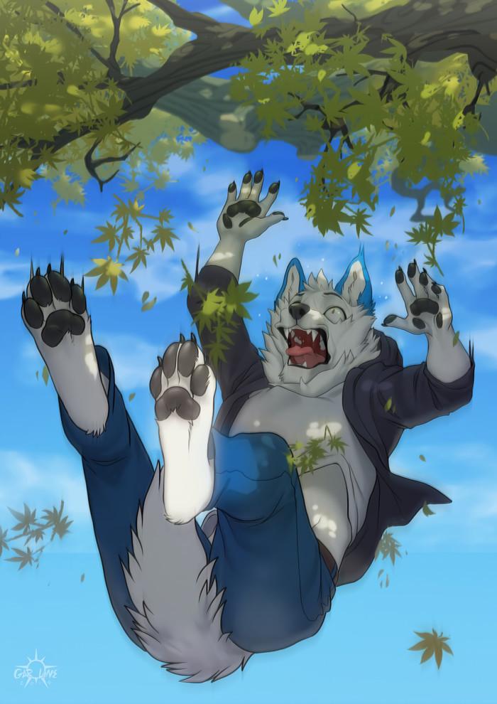 Drop Фурри, Furry Art, Furry Canine, Furry wolf, Падение, С дерева упал, Kero Tzuki