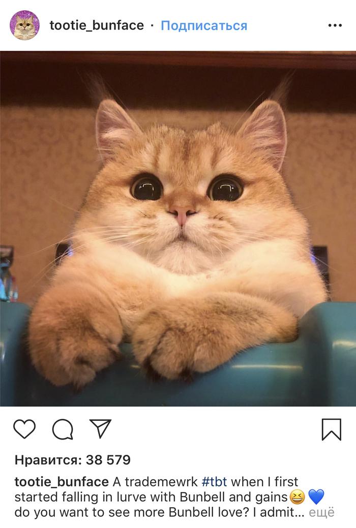 Инстакотики парт ту Кот, Котомафия, Мило, Instagram, Длиннопост, Скриншот