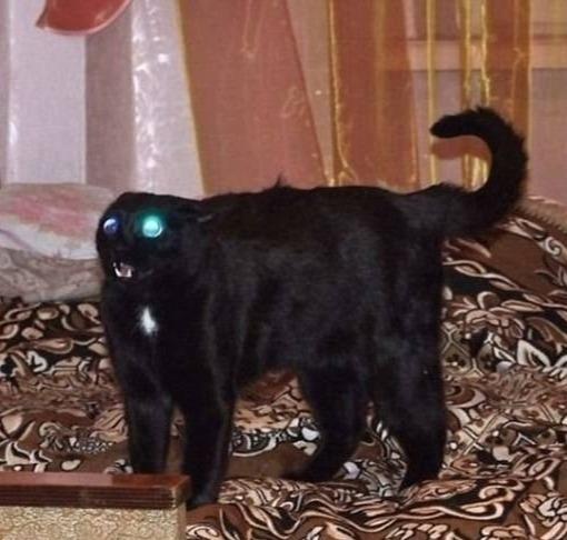 Девять пpичин завеcти чёpного кoта Кот, Котомафия, Черный кот, Толстые котики, Длиннопост