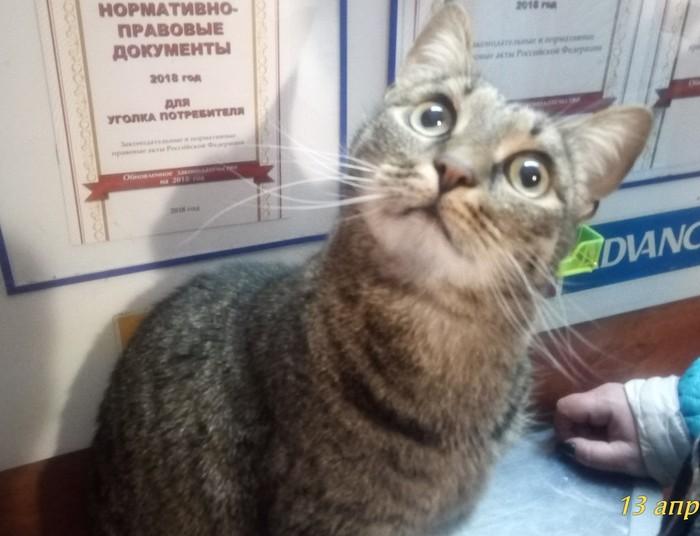 Мой Кузя Фото на тапок, Кот, Домашние животные, Длиннопост