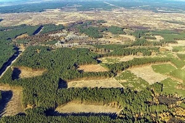 The New York Times: Китай сохраняет свои леса, вырубая Сибирь Лес, Коррупция, Китай, Яплакал, Длиннопост