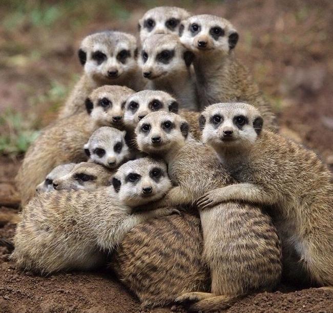 Семейное фото.
