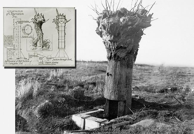 Хочу все знать #200.  Фальшивое дерево — наблюдательная вышка времен Первой мировой. Хочу все знать, История, Первая мировая война, Фотография, Маскировка, Наблюдение, Длиннопост