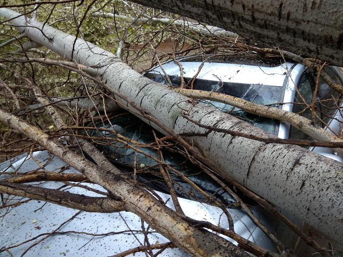Как же мне повезло! Упало дерево, Машина, Несчастный случай, Длиннопост