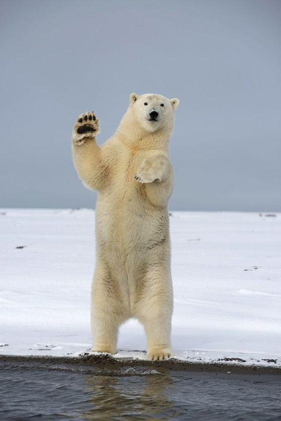 Медвежий привет