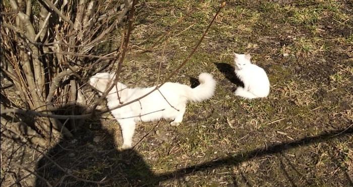 До и после - абсолютно белый котенок. Преображение. Кот, До и после, Помощь животным, Волонтеры, Котомафия, Фотография, Длиннопост