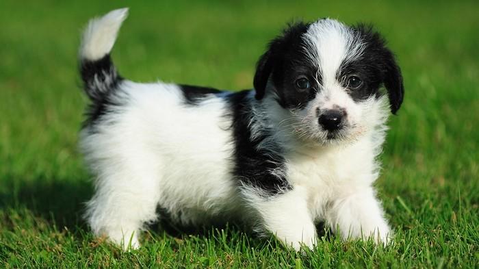 Хотите собаку? А не всё так просто! Собака, Домашние животные, Животные, Жизнь, Выбор, Такса, Длиннопост