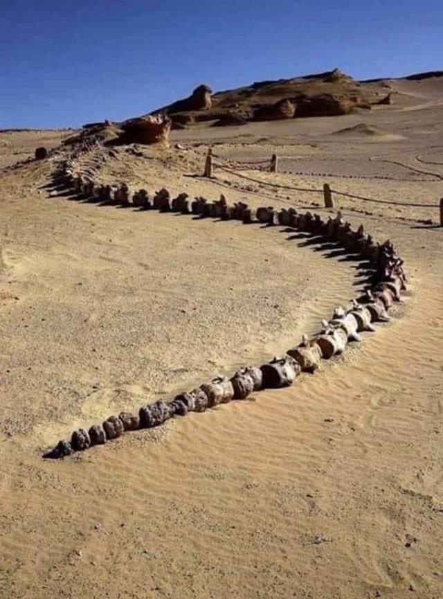 Окаменелость кита найдена в Египте