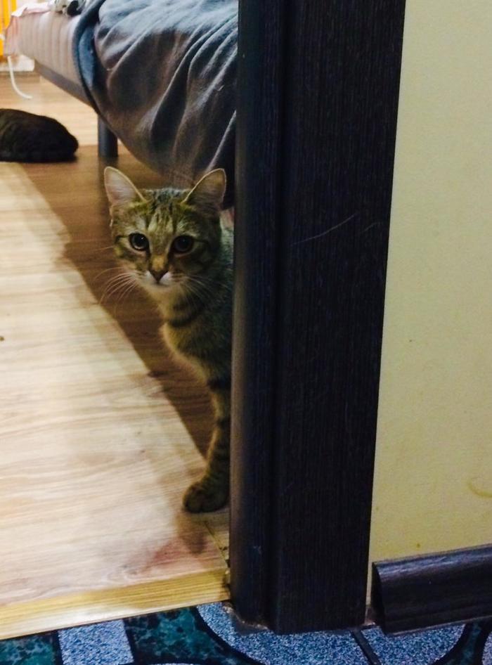 Кошку назвали Дочкой и вернули нам обратно. Кот, Помощь животным, Волонтеры, Фотография, Длиннопост, Санкт-Петербург