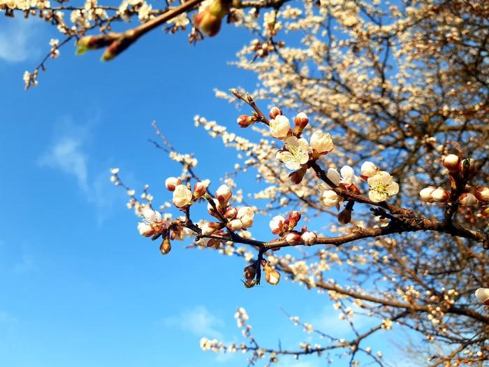 Весна Весна, Фотография, Дерево