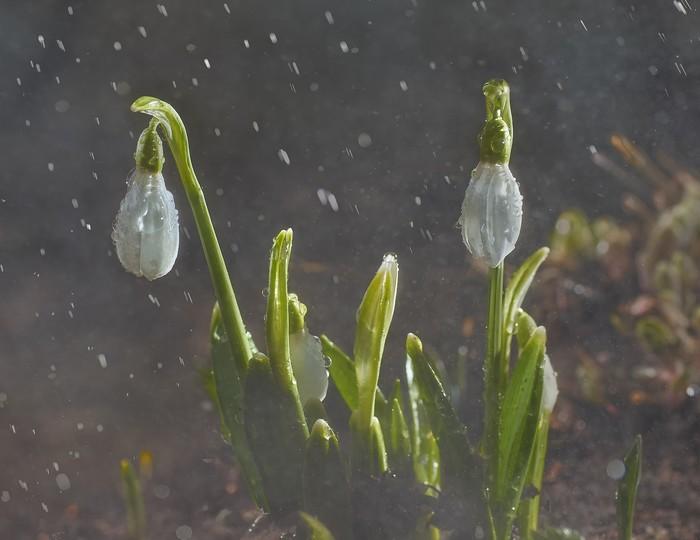 Просто весенний дождь
